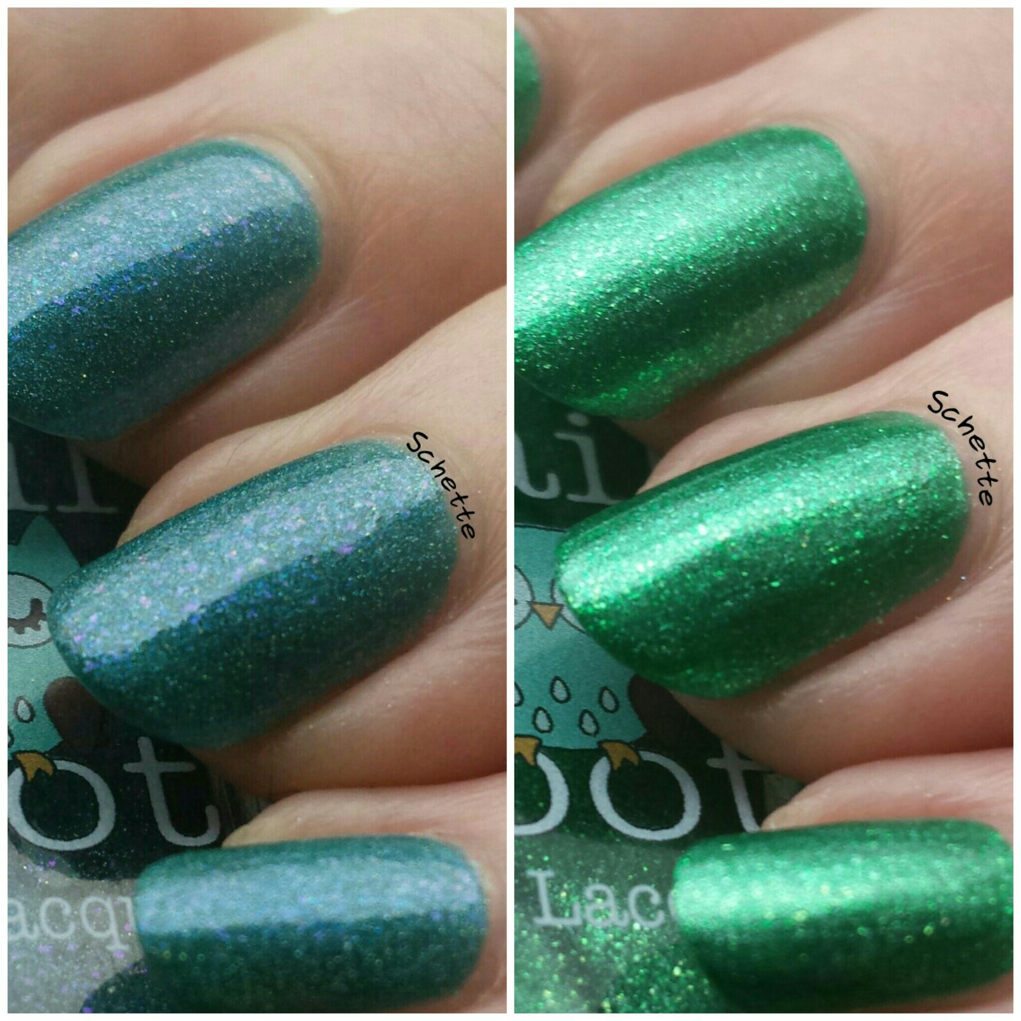 Nail Hoot : Sea of Galilee, Terra Nova